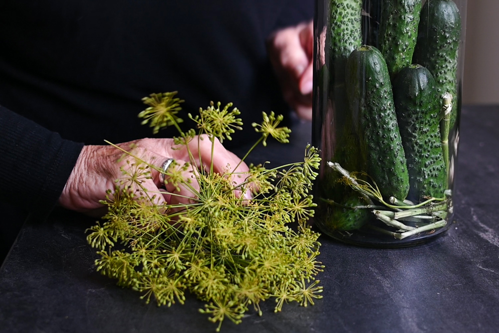Dill Pickles – How and Why to Pickle (lacto-fermentation)